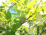 image/2012-07-18T14:14:56-1.jpg